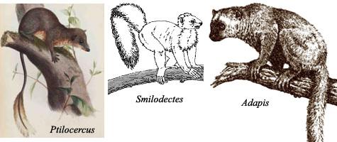 Od gmazova do hominida Early_primates