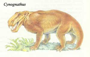 Od gmazova do hominida Cynognathus