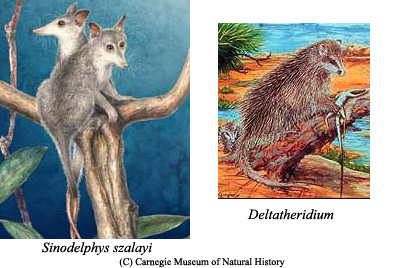 Od gmazova do hominida Metathere