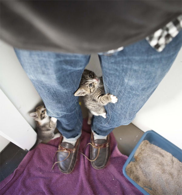 [Jeu] Association d'images Kittens_climbing_leg