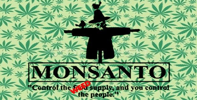 Monsanto Poised To Take Over the Weed Industry Monsantoweed-650x330