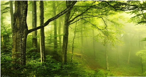 Forest Bathing Increases Immunity Beautiful_green_forest-wallpaper-800x600
