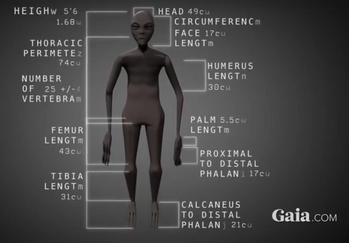 Nazca Alien Mummy Update: Eggs found in one of the mummies 2017-06-25_14-26-54