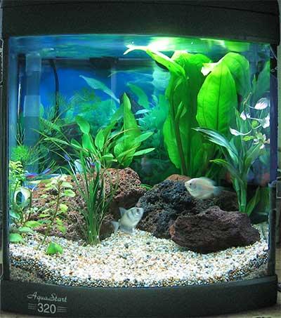 صور احواض سمك Fish-tank