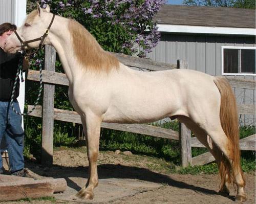 Värvustest üldse Dun-horse-8