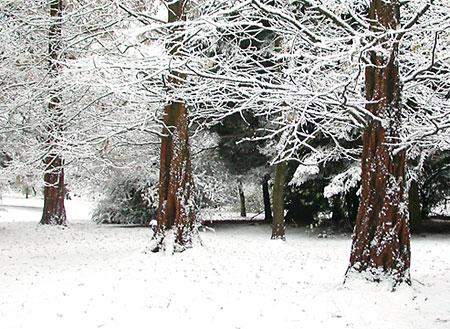 Trees - Page 2 Three_snowy_trees