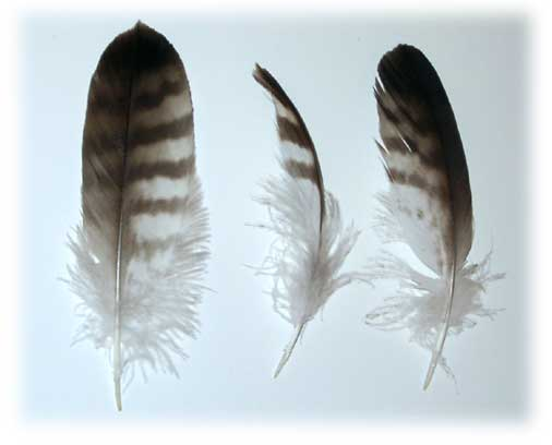 Perje Feathers_contour