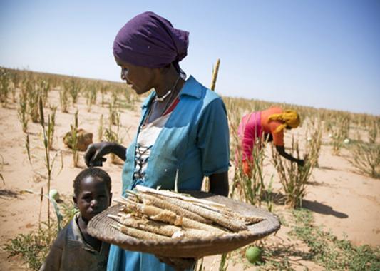 صـــــور مـــــن دارفــــــور Darfur_farming_un_albert_gonzalez
