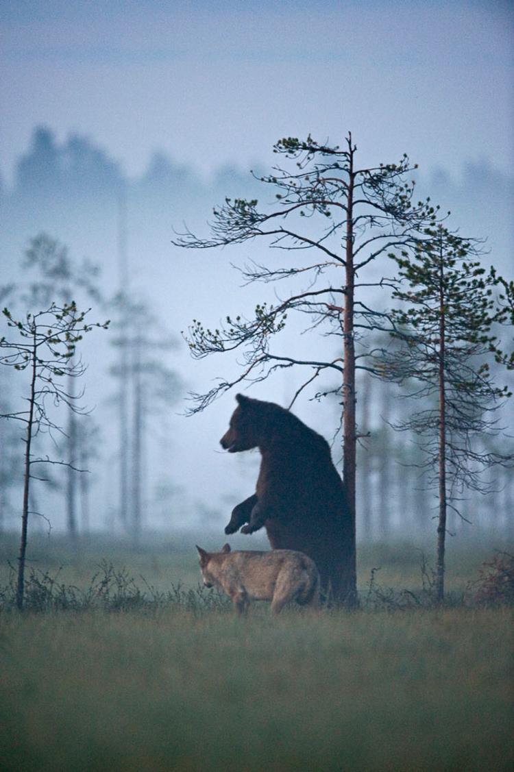 Bear & Wolf Become Besties! 10_bear-and-a-wolf-best-friends