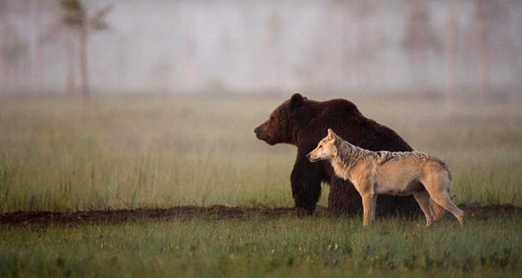 Bear & Wolf Become Besties! 1_bear-and-a-wolf-best-friends