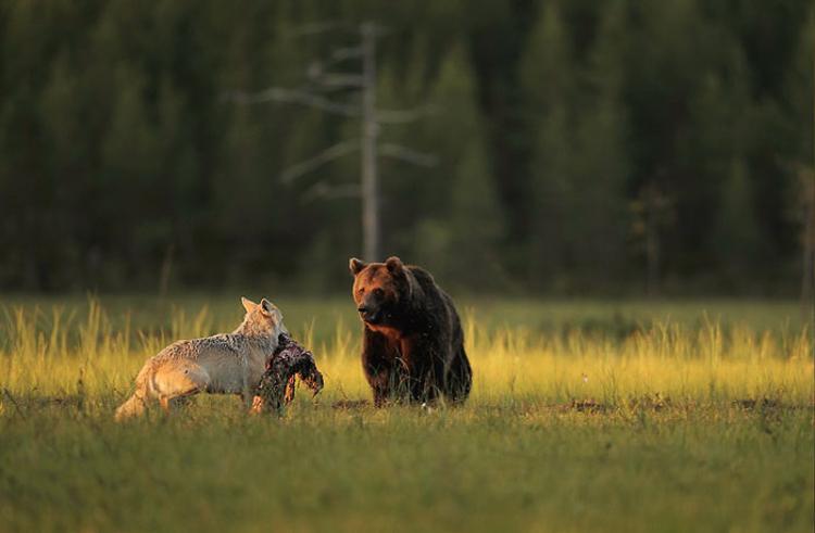 Bear & Wolf Become Besties! 3_bear-and-a-wolf-best-friends