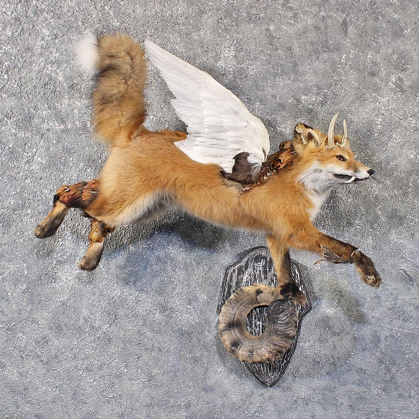 Mátame, camión! (El Tópic de la Taxidermia Chunga) - Página 9 Red-fox-legendermy-life-size-taxidermy-mount-_11820-for-sale-_-the-taxidermy-store