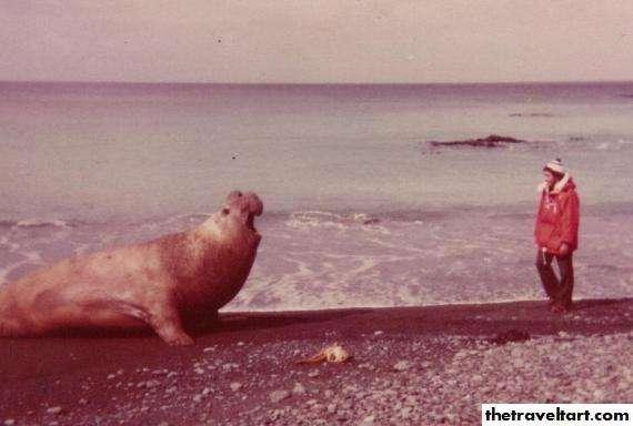 Orca x Elefante Marinho Elephant-Seal
