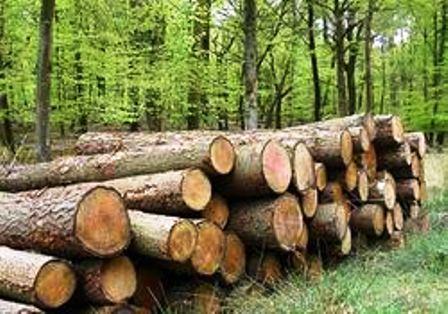 Năm 2012 dự kiến khai thác 200.000 m3 gỗ rừng tự nhiên TT_051011_gonglieu