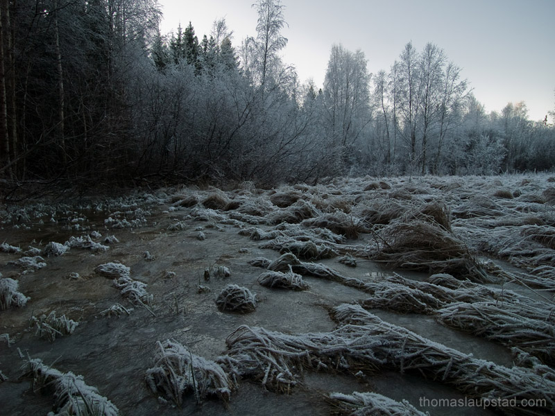 Роскошные пейзажи Норвегии - Страница 3 Frozen_field_rime_forest_800