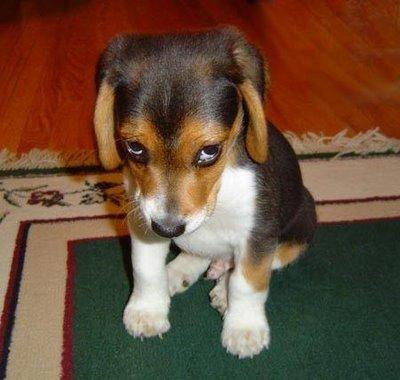 Happy Birthday Bonce - Page 2 Sad-puppy