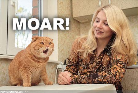 """[Rencontre BB's Team] 11 02 2012. """"Allez les mecs, on joue à touche cul !!"""" Moar_cat2"""