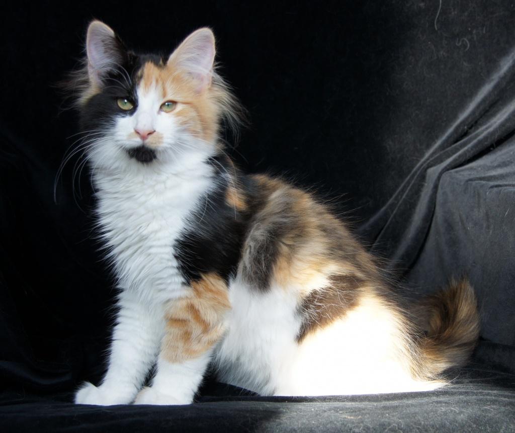 Du oder deine Haustiere als WaCa Katze! (Hilft bei langeweile!) 20110928210426