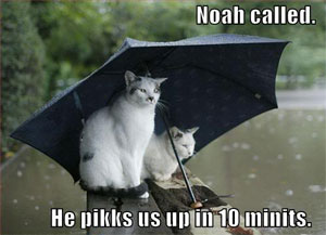 Funny/Cute Animal Pics - Page 2 Funny-pictures-cats-umbrella-rain-f2