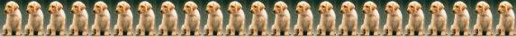 recor de maximo de cachorros nacido por camada Cachorros