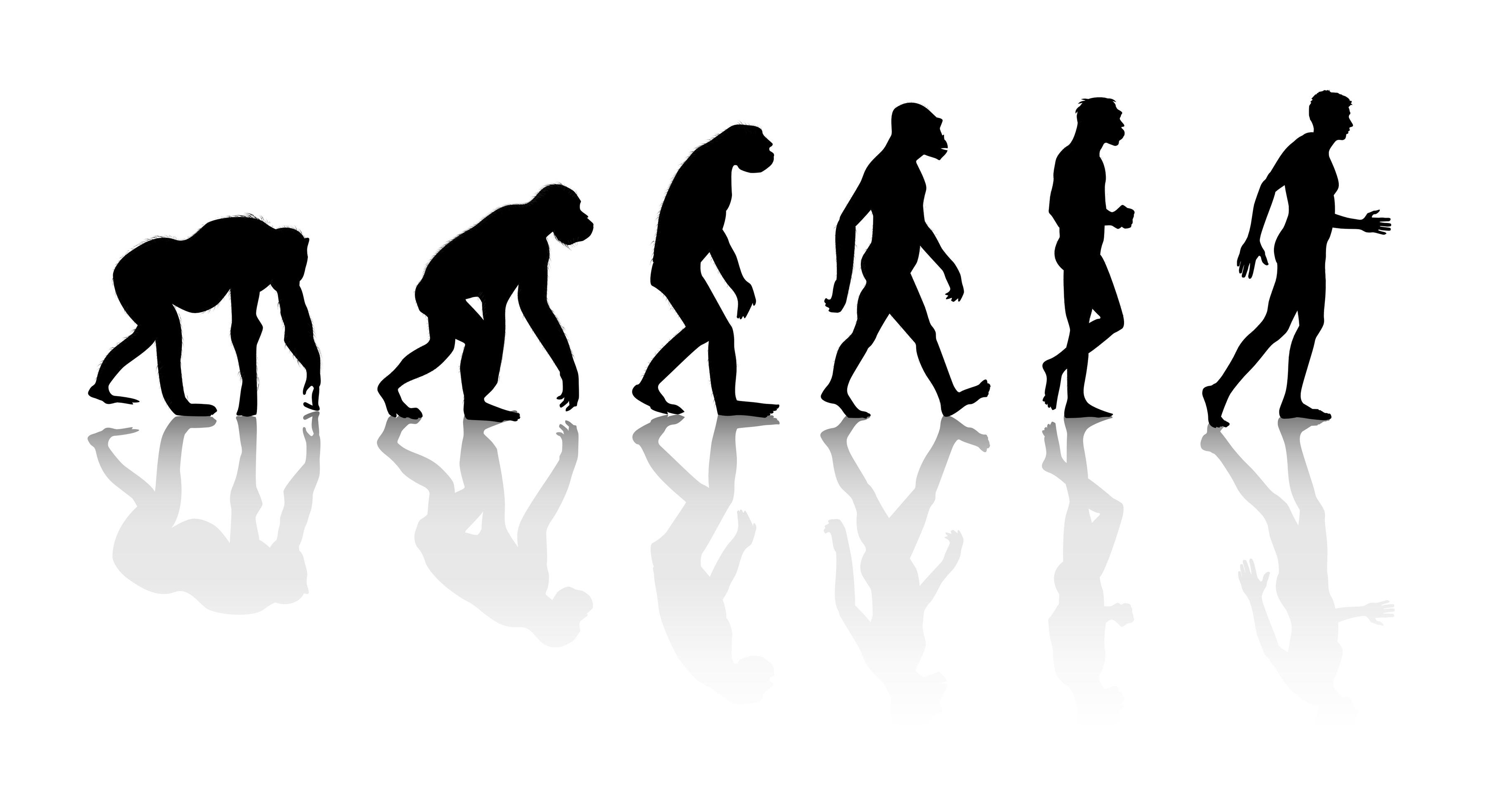 Le Phénix Enchaîné #5 Seo-evolution