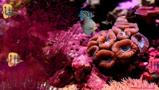 screensaver aquarium gratuit