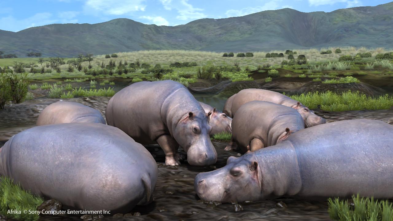 Mais où est Uccen ???  - Page 20 Quelques-hippopotames-qui-se-prelassent-dans-la-boue