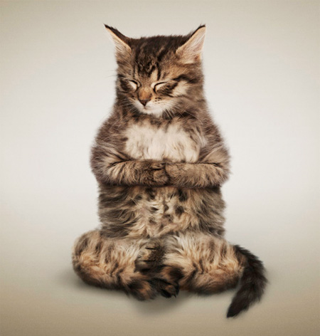 eat meat - Calling All Carnivores - Page 3 Yogacats09