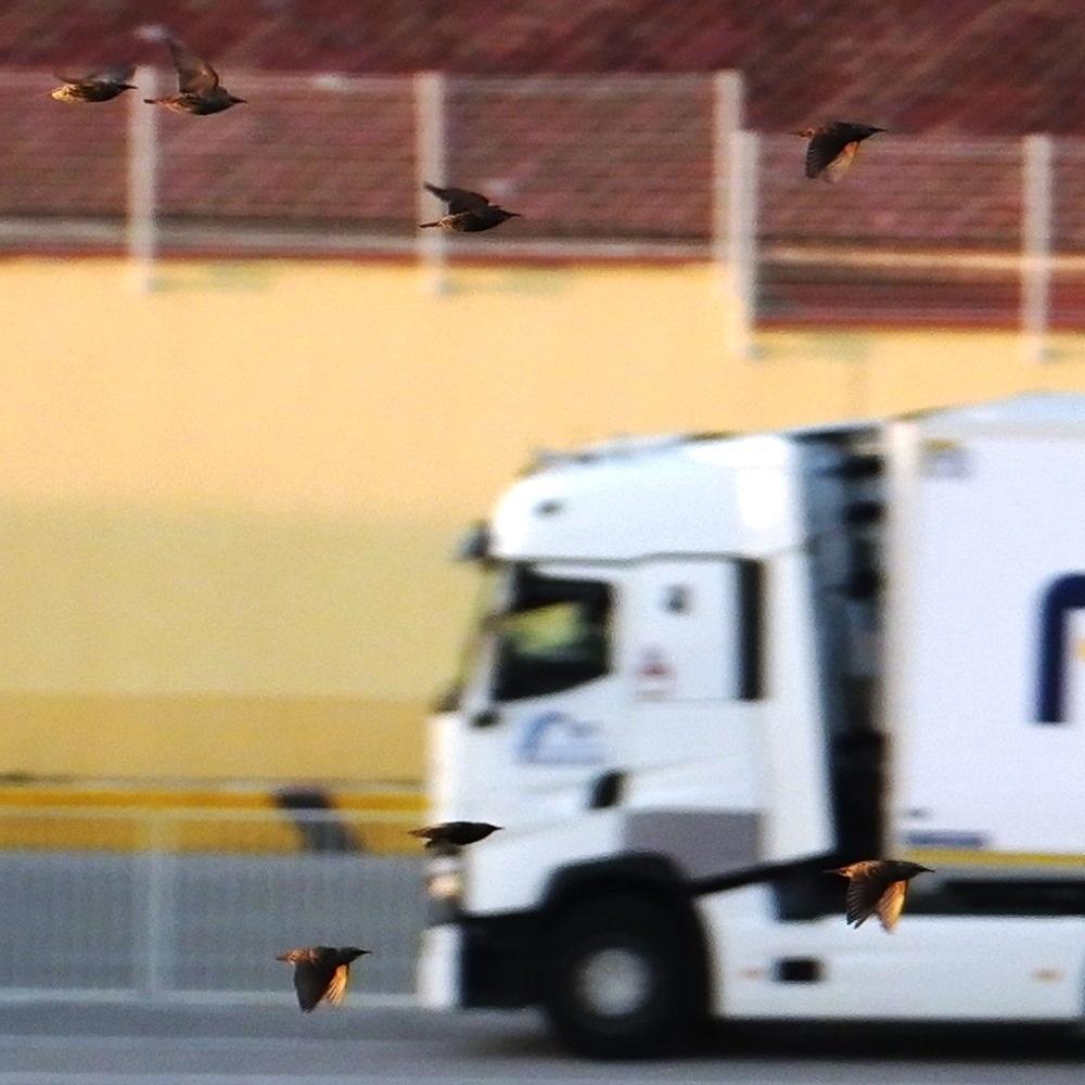Vol d'oiseaux sur le port CSDIM7922
