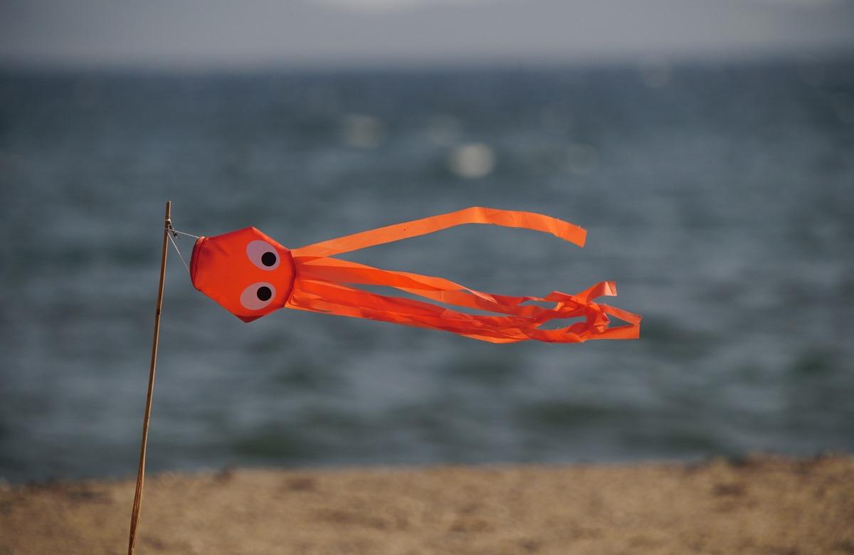 Pieuvre dans le vent SDIM4132