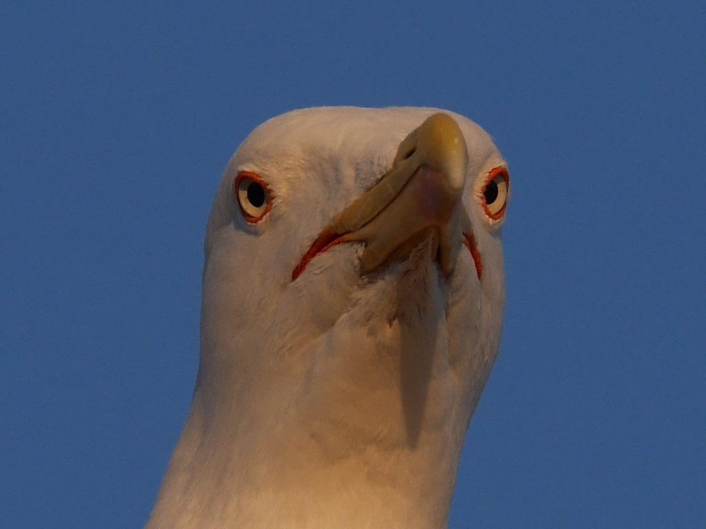 moi aussi je fais avec les oiseaux que j'ai chez moi ... P1230839