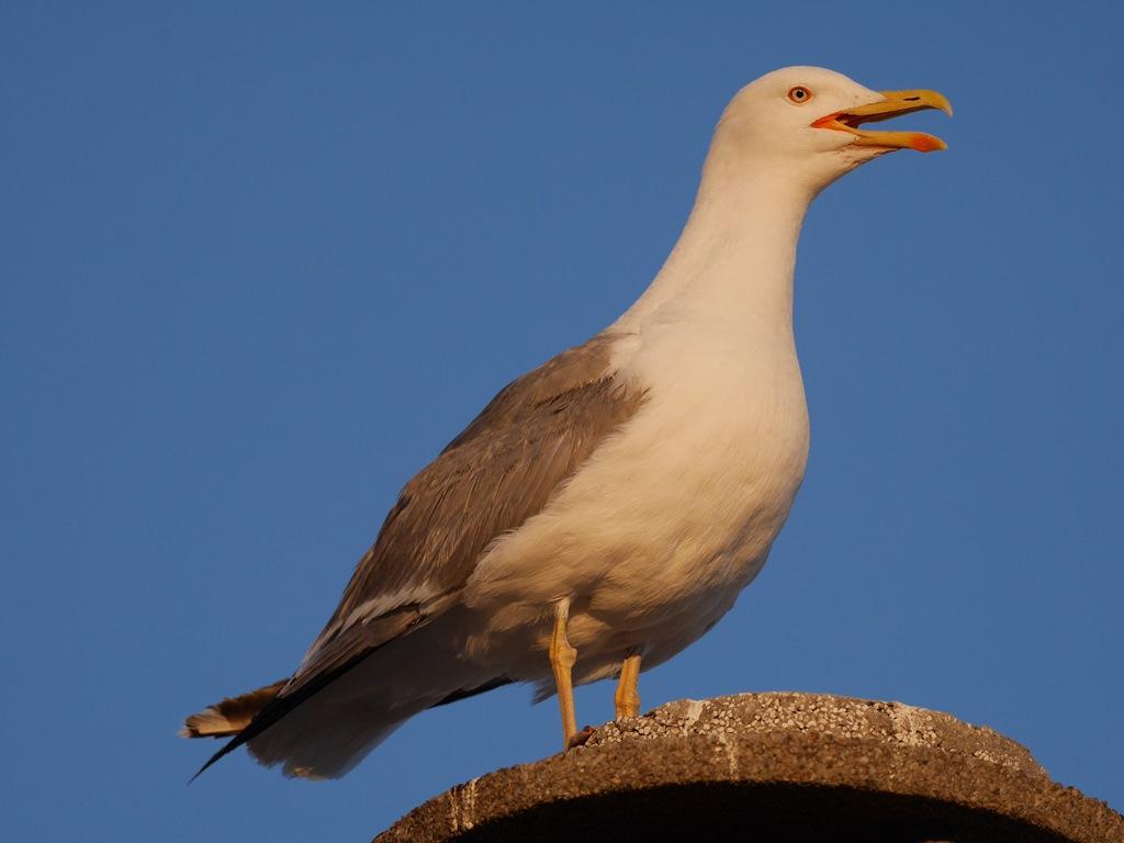 moi aussi je fais avec les oiseaux que j'ai chez moi ... P1230853