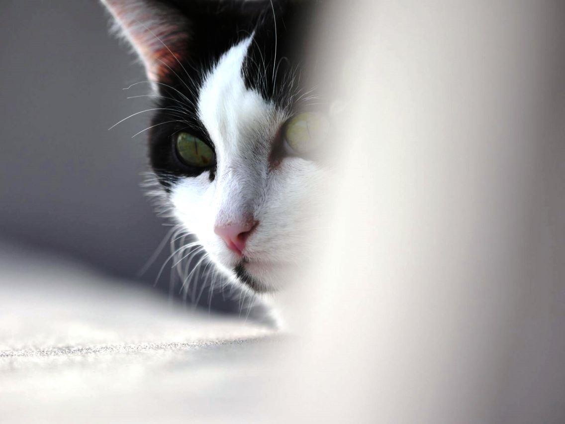le chat de la voisine ;) + un petit bout .. P1000568