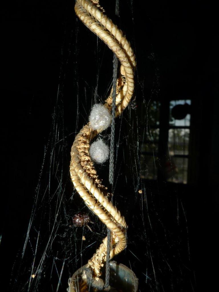 L'araignée , l'araignée .. P1110610