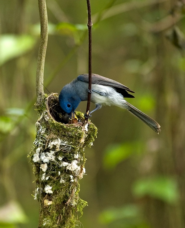 oiseau bleu Essai