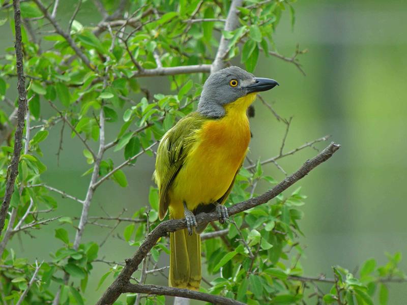un oiseau à trouver Martin 20 mars trouvé par Martine - Page 2 Kenya_017