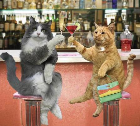 Como perros y gatos. Imagenes-graciosas-gatos-p