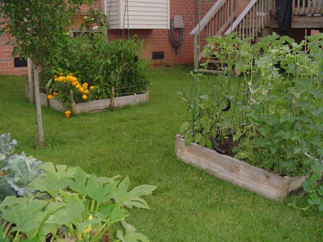 Building the garden and first year results. Garden03small
