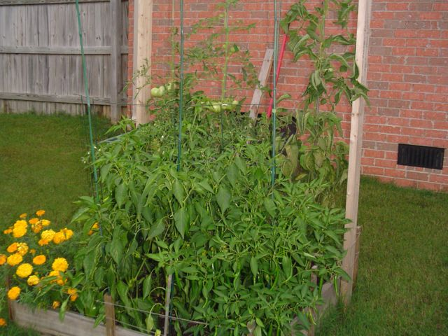 Building the garden and first year results. Garden05small