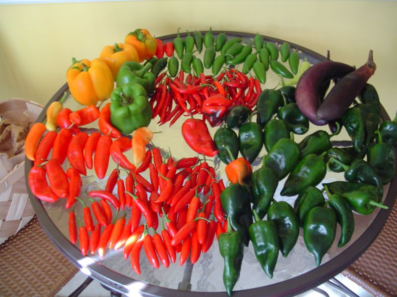 Building the garden and first year results. Peppers01