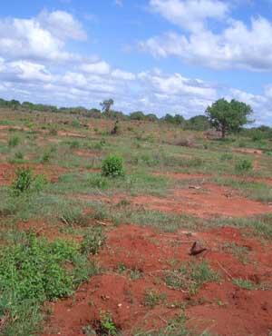 Una fattoria per un sogno: mantenere con i frutti della terra l'intera comunità di Gis, a 50 chilometri da Malindi, in Kenya 3