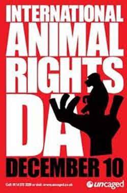 LUNEDI 10 DICEMBRE Giornata-Internazionale-per-i-Diritti-Animali