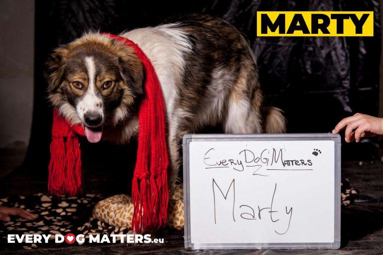 MARTY - 2 ans (tripattes)  Asso Un coeur pour eux - les loulous du refuge de Sofia (Bulgarie) Marty1-1-768x512