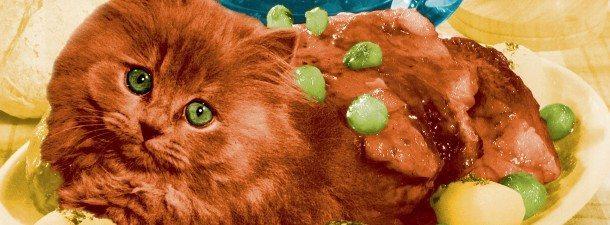 J'aime les animaux (ça manquait aux sujets !) - Page 3 Mangez-les-pascal-remy-epure-chat-610x225