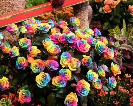 جمال تلك الزهور Large_c_1354051978