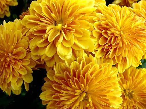 معلومات عن النباتات السامة الاخطر في العالم 6808-2-or-1399908133