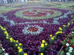 لكل محبي الورود ....!!! - صفحة 3 1d699d5cee