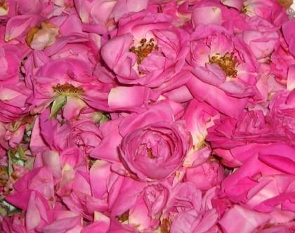 لكل محبي الورود ....!!! - صفحة 3 4b5633c4ec