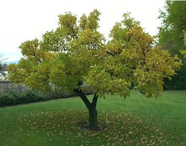 گھومنے والا درخت Urdu-ad771654611
