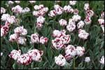 ~Floriiii~ - Page 7 Flori_64_m